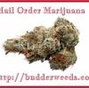 Buy Weed Online In Canada – Just Enhance Your Knowledge Now